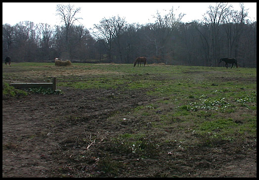 horses grazing by Saddle Barn
